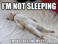 cat-sleep